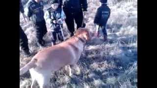 Самая сильная собака деревни Мохового