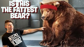 IS THIS THE FATTEST BEAR? - Dude Soup Podcast #195