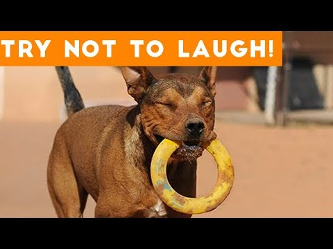Cute Funny Dogs & Cat Videos Animals Compilation | Funny Pet Videos July  2018