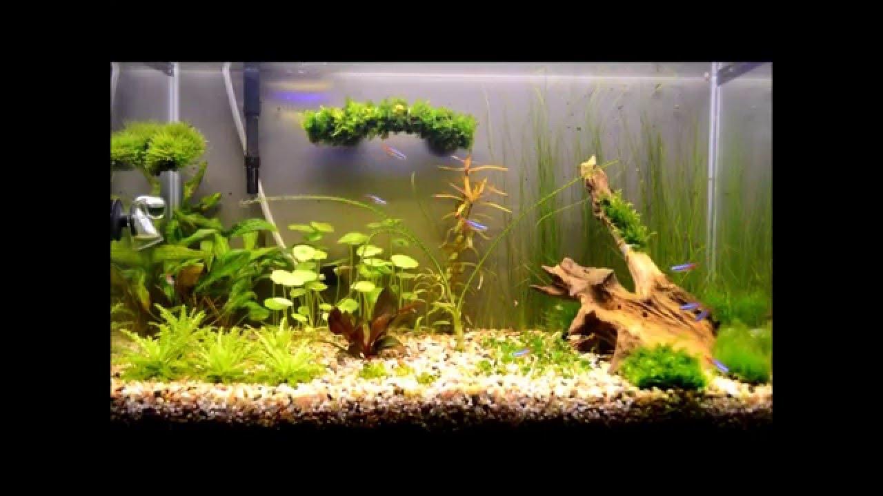 фото аквариум на 50 литров