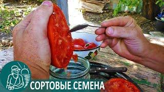 🍅 Как собрать семена помидор в домашних условиях