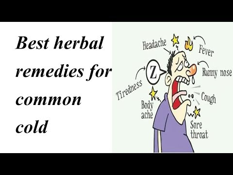 Best herbal remedies for common cold