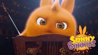 Sunny Bunnies - PLAY A CONCERT | Cartoons For Children | Funny Cartoons For Children