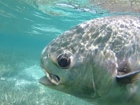 Fishing For Permit In Belize