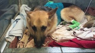 Florida Rescue Dog Saves Daughter of New Owner's Life