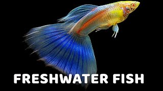 10 Best Freshwater Fish Species For Beginners