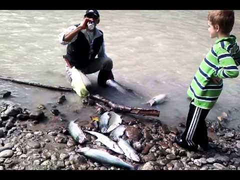 Fishing at puyallup river 2013 youtube for Puyallup river fishing