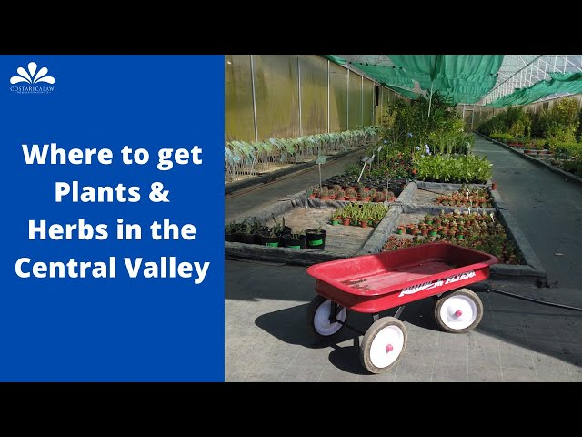 Where to get plants and herbs in the Central Valley