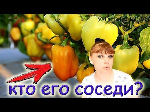 ХОРОШИЕ и ПЛОХИЕ соседи ПЕРЦА !!! Что посадить рядом с перцем болгарским на грядке?