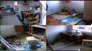 Hop-It Holidays Rabbit Cams