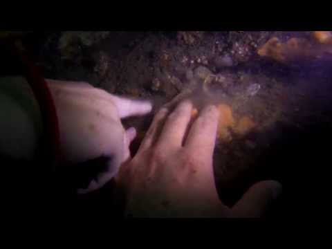An octopus tried to eat me!