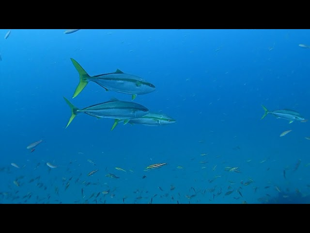 Wreck Dive (しらはま沈船)