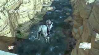 A SMART HORSE