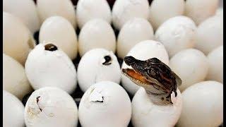 Yumurtadan Çıktığına İnanamayacağınız 10 Hayvan
