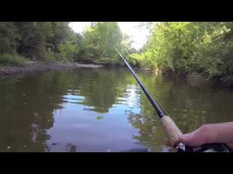 Wading For Smallmouth Bass In Alum Creek, OH 8/10/14