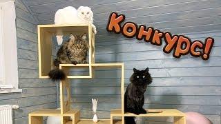 КОНКУРС! / Собираю игровой комплекс для кошек и рысят