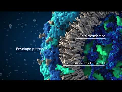 Zika Virus - Scientifically Accurate 3D Model