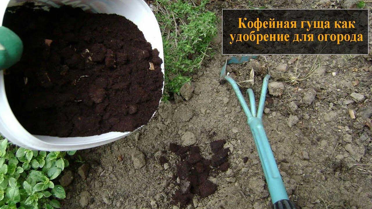 Кофейная гуща как удобрение для огорода