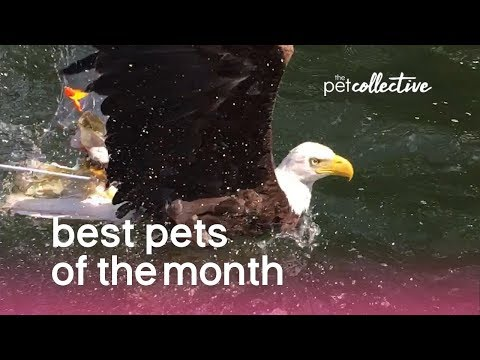 Best Pets of the Month (August 2019) | The Pet Collective
