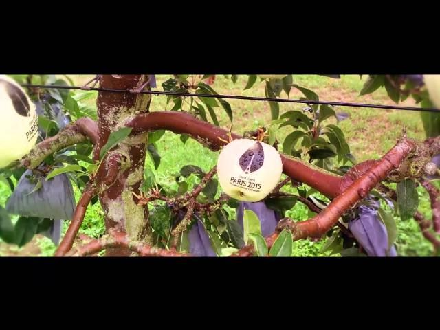 Des pommes pour le climat - Time-lapse