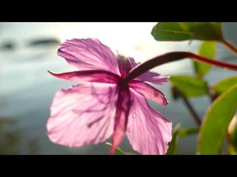 4K Vidéo Nature/Eau/Plante