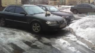 Кошка сидит греется на машине