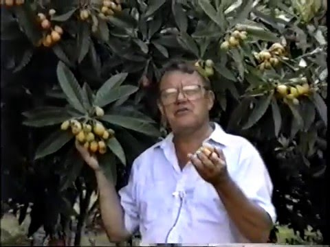 ECHO Tropical Fruits Video Series - (Part 4 of 6)