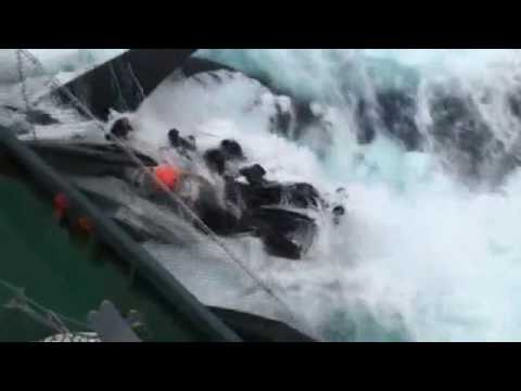 Japanese whalers run over Sea Shepherd boat