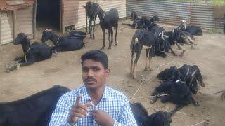 goat farming part 2 शेळीपालन साधी पद्धत.