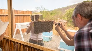 Take Our Beekeeping & Honey Tour