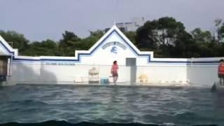 テレビドラマ 水族館ガール での C1シーワン役のバニラさんも大活躍。