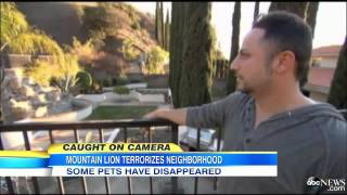 Camera captured Lion attacks household Pets