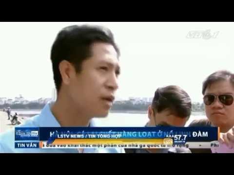 Tin Việt Nam, đài Saigon Television ngày 27/10/2016.