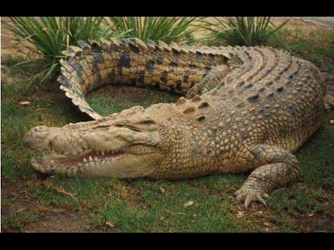 The 13 Scariest Australian Animals