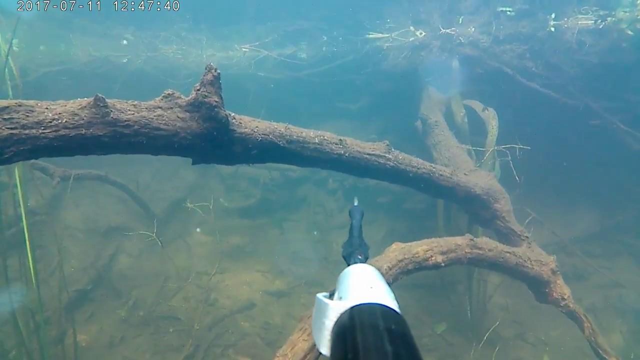 подводная охота 07 - 20.  Щука  - Голавль! Вода как в аквариуме