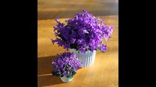 Подкорми растения обычной касторкой и будешь в шоке от цветения