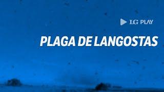 Piden declarar la emergencia por posible llegada de plaga de langostas