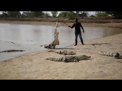 Au Burkina Faso, le crocodile est le meilleur ami de l