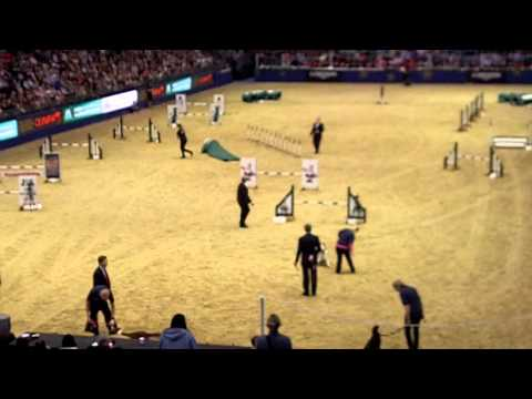 KC Olympia Large Dog Jumping Speed Stakes 2015 ... second half (first half missing)