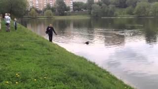 🍀 How to Walk the Dog | Как нужно выгуливать собаку