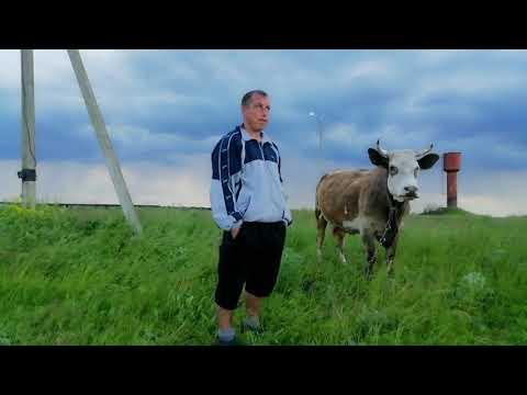 Вопрос: Почему у коровы у вымени 4 соска а теленок рождается 1?