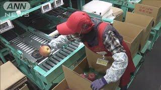 「良いリンゴを全国に」台風被害の選果場が再開(19/11/01)
