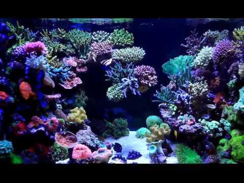 Reef Aquarium / Moon's System(Eco Balance Inc. South Korea)