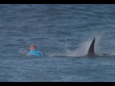 Thumbnail: Jaw-dropping: Surfer fights off shark attack live on TV in S. African competition