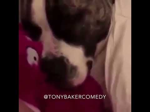 This Cat Has HAD IT With His Snoring Dog Buddy (TonyBakerVoiceOver)