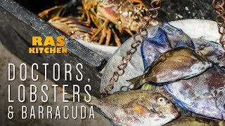 Doctors, Lobsters, Barracuda & Macca Back!