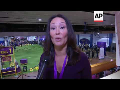 Westminster Dog Show a showcase for young handlers