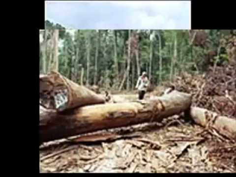 Hun Sen Said He Would Have Cut Off His Head If There Were Still Illegally Cutting Forest