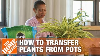 How To Transfer Plants From Pots - The Home Depot