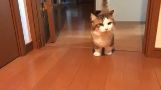 わんわんと鳴きながら探す猫 thumbnail
